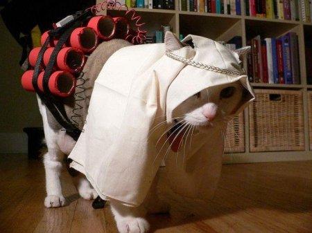 gato_suicida1