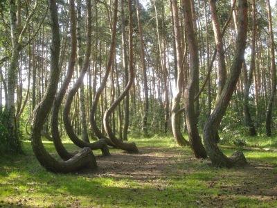 Al fondo se ven árboles perfectamente rectos.
